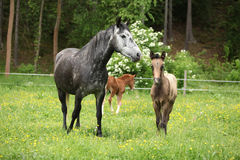 Beautiful mare with its foal on pasturage Stock Photo
