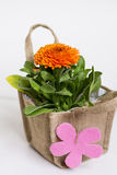 Beautiful marigold flower with gift card packed in canvas bag Royalty Free Stock Photo