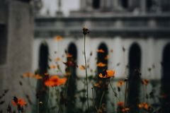 Beautiful marigold. A flower that I like;lonely royalty free stock photo