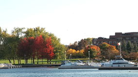 Beautiful Marina, boats and red trees stock video footage