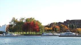 Beautiful Marina, boats and trees stock footage