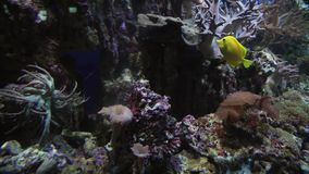 Beautiful marine aquarium with corals stock footage video. Beautiful marine aquarium with a corals stock footage video stock video