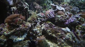 Beautiful marine aquarium with corals stock footage video. Beautiful marine aquarium with a corals stock footage video stock video footage