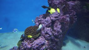 Beautiful marine aquarium with tropical fish and corals stock footage video. Beautiful marine aquarium with a tropical fish and corals stock footage video stock video