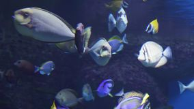 Beautiful marine aquarium with tropical fish and corals stock footage video. Beautiful marine aquarium with a tropical fish and corals stock footage video stock video footage