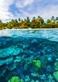 Beautiful marine life Stock Images