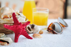 Beautiful marine still life Stock Images