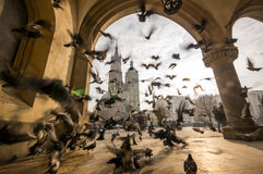 Beautiful market square with birds, Krakow, Poland Stock Photography