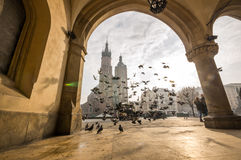 Beautiful market square with birds, Krakow, Poland Royalty Free Stock Photos