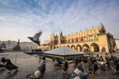 Beautiful market square with birds, Krakow, Poland Royalty Free Stock Photography