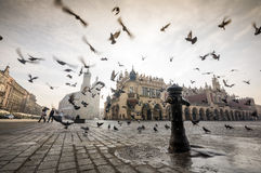 Beautiful market square with birds, Krakow, Poland Stock Photos