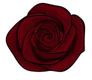 Beautiful maroon roses alone Royalty Free Stock Photography