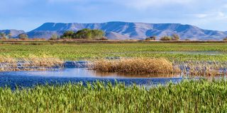 The beautiful marsh at Alamosa National Wildlife Refuge at the edge of the Rocky Mountains in southern Colorado. Wide view of the marsh at Alamosa National stock photo