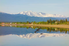 Beautiful marsh lake in the yukon territories Stock Photography