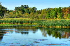 Beautiful marsh Stock Images
