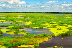The beautiful marsh Royalty Free Stock Image