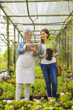 Worker and customer in a green house Royalty Free Stock Photography