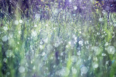 Beautiful meadow background. Royalty Free Stock Photos