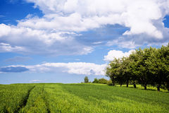 Beautiful meadow with blue sky Royalty Free Stock Images