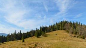 Beautiful meadow in the Carpatian mountains, Ukraine. Stock Photos