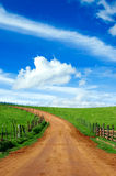 Beautiful meadow and dirt road  Stock Photography