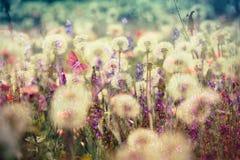 Beautiful meadow - flowering, blooming meadow flowers stock image