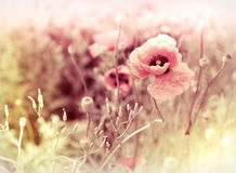 Beautiful meadow flowers Royalty Free Stock Image