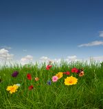 Beautiful meadow with flowers. Flowers on the green grass royalty free stock photography