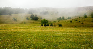 Beautiful meadow with flowers in the mountains. The fog in the b. Rbeautiful meadow with flowers in the mountains. The fog in the background Stock Photos