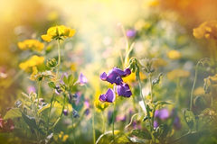 Beautiful meadow flowers Stock Photos