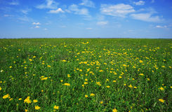 Beautiful meadow full of flowers Stock Photos