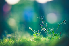 Beautiful meadow Stock Photos