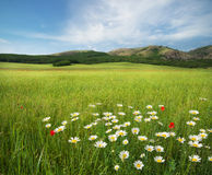 Beautiful meadow landscape Stock Photography