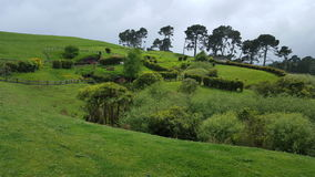 Beautiful Meadow. Lord of the rings tour New Zealand. Garden, meadow and grass Stock Photo