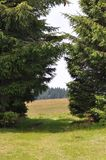 Fir trees. Beautiful meadow and mountain landscape Royalty Free Stock Photo