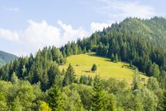 Beautiful meadow on the mountain Royalty Free Stock Images