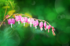 Beautiful meadow. Beautiful pink flower meadow.blurred background Stock Images