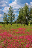 Red flowers among green grass on meadow Royalty Free Stock Photos