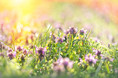 Beautiful meadow in spring Stock Photos