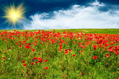 Beautiful meadow by summer. Royalty Free Stock Photo