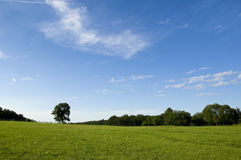 Beautiful Meadow on Summer Day Royalty Free Stock Photography