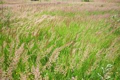 Beautiful meadow Royalty Free Stock Photo