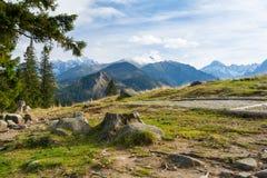 Beautiful meadow in Tatra mountains - Rusinowa Polana in Poland royalty free stock image