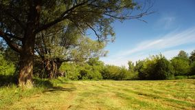 Beautiful meadow time lapse. Summer in full HD stock footage