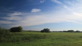 Beautiful meadow time lapse. Summer in full HD. Clouds moving above the meadow stock video