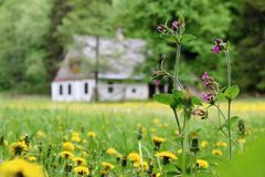 Beautiful meadow with wild spring flowers, rural european old house on the background royalty free stock images