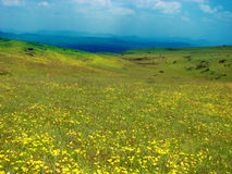 Beautiful Meadows in India Royalty Free Stock Photos