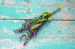 Beautiful medical herb sage (Salvia officinalis) bunch royalty free stock images