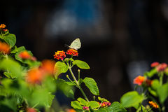 Beautiful mediterranean flowers Royalty Free Stock Photography