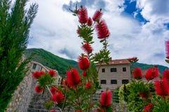 Beautiful mediterranean landscape - town Tivat, Kotor bay Boka Kotorska , Montenegro.  stock photos